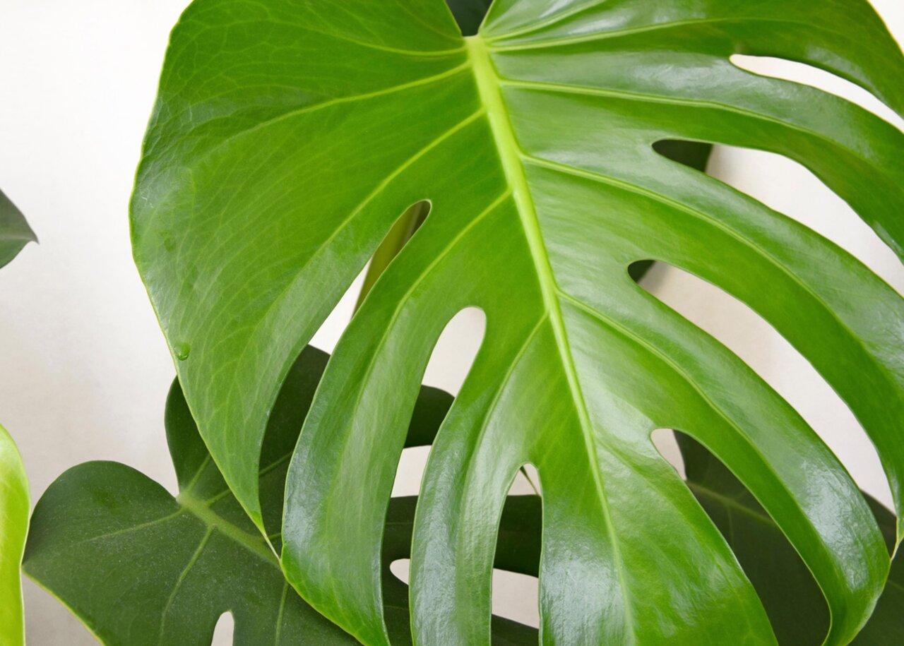 grön växt stora blad