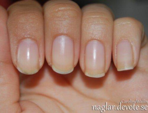 myrraolja naglar