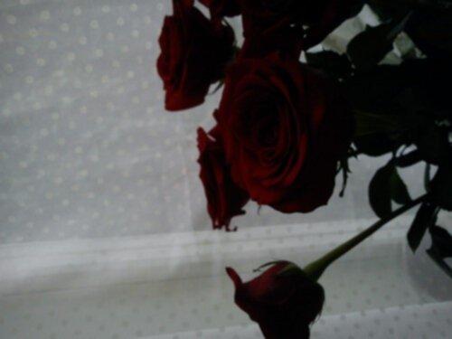 sju röda rosor
